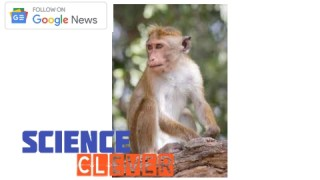 https://scienceclever.com/chinas-monkey-b-virus-chinas-first-human-infection-case/