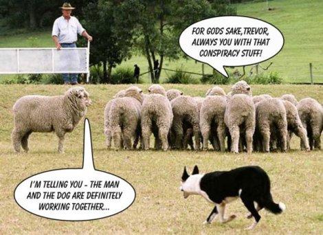 sheepr-conspiracy-tv