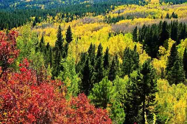 Fall on Peak to Peak Highway