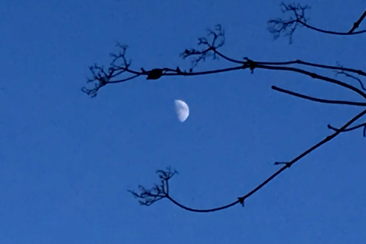 Observe the Moon Night at Laguna Coast Wilderness Park
