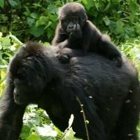 World's 25 Most Endangered Primates List Released