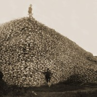 Extinction, Mass Extinctions, Extinct Species, And The Ongoing 6th Great Mass Extinction