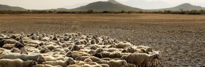 animals desertification