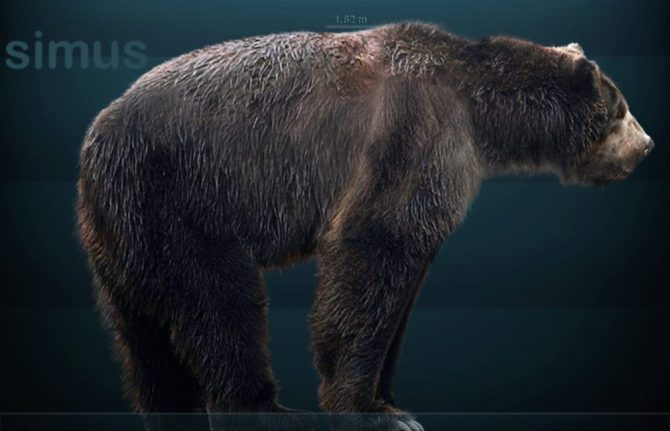 Short faced bear recreation
