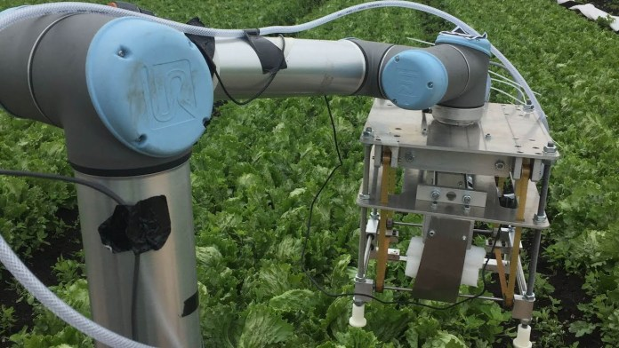 Robot uses machine learning to harvest lettuce