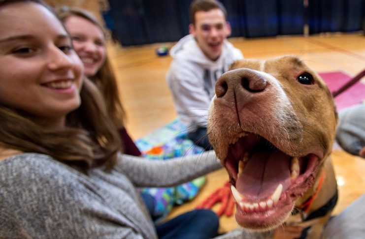 Study demonstrates stress reduction benefits from petting dogs, cats