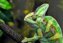 Colour-changing artificial 'chameleon skin' powered by nanomachines