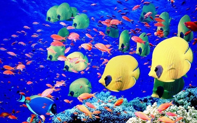 amaging-fishes