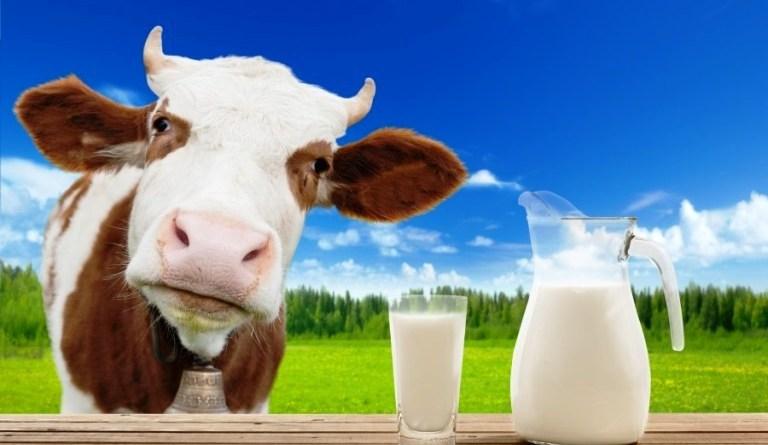 गाईको दूध