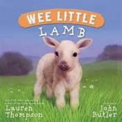 baby animal lamb