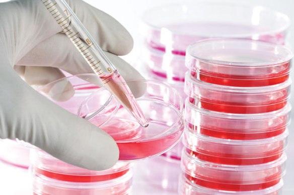cellculture.jpg