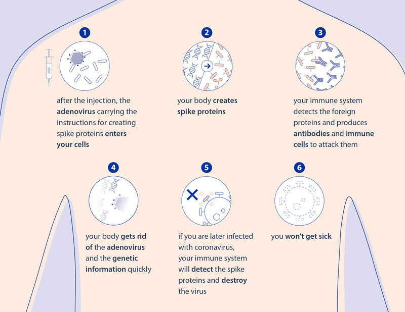 Infographic - Viral vector vaccines against COVID-19: how they work