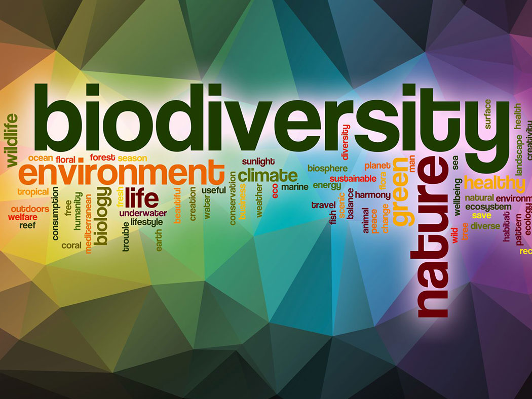 Biodiversity word cloud with abstract background
