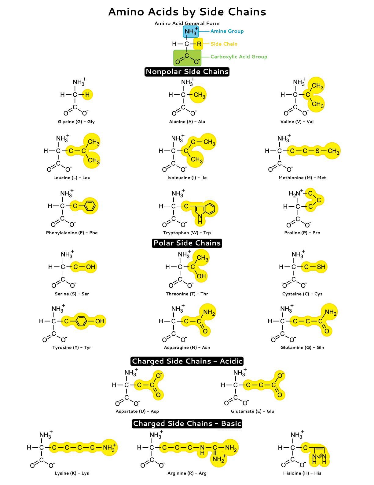 Amino Acid Side Chains Study Sheet