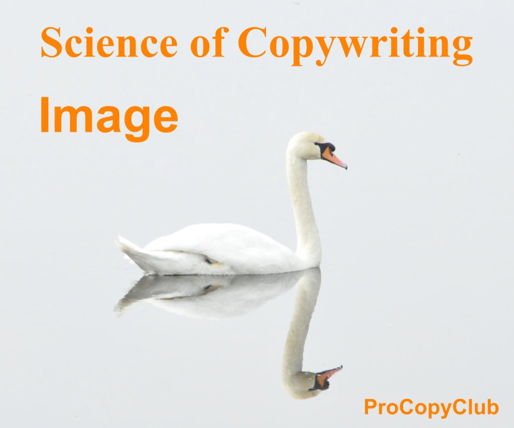image swan - copywriting reminder about positioning