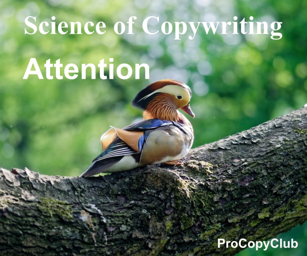 getting attention from copywriting - image of duck