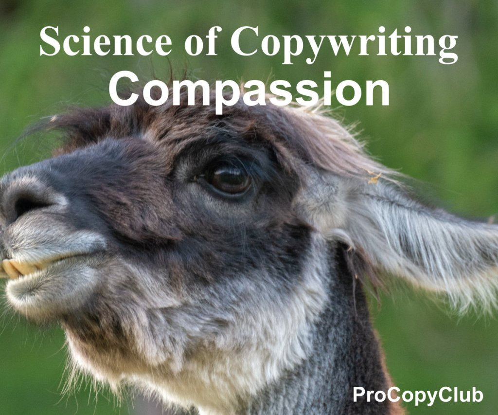 compassion and copywriting - image of llama