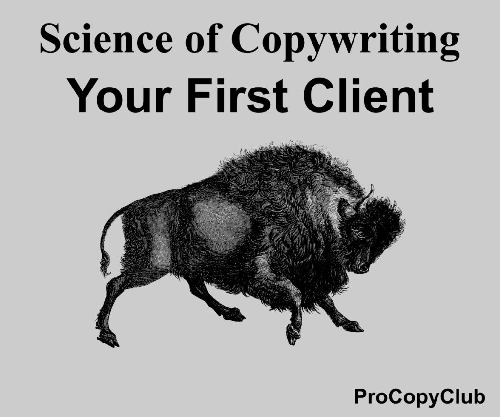 How To Find Your First Copywriting Client image of bison