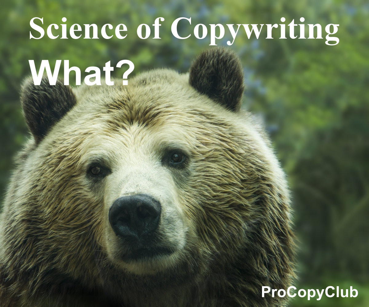 awareness levels in copywriting image of a bear