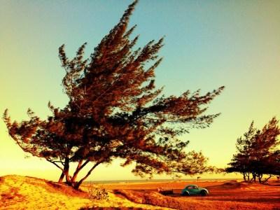 tree-984315_1280