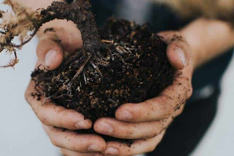 soil contents