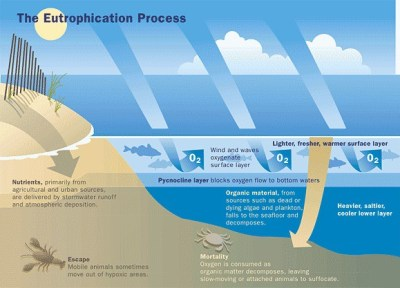 eutrophication process