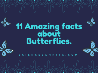 facts_about_butterflies