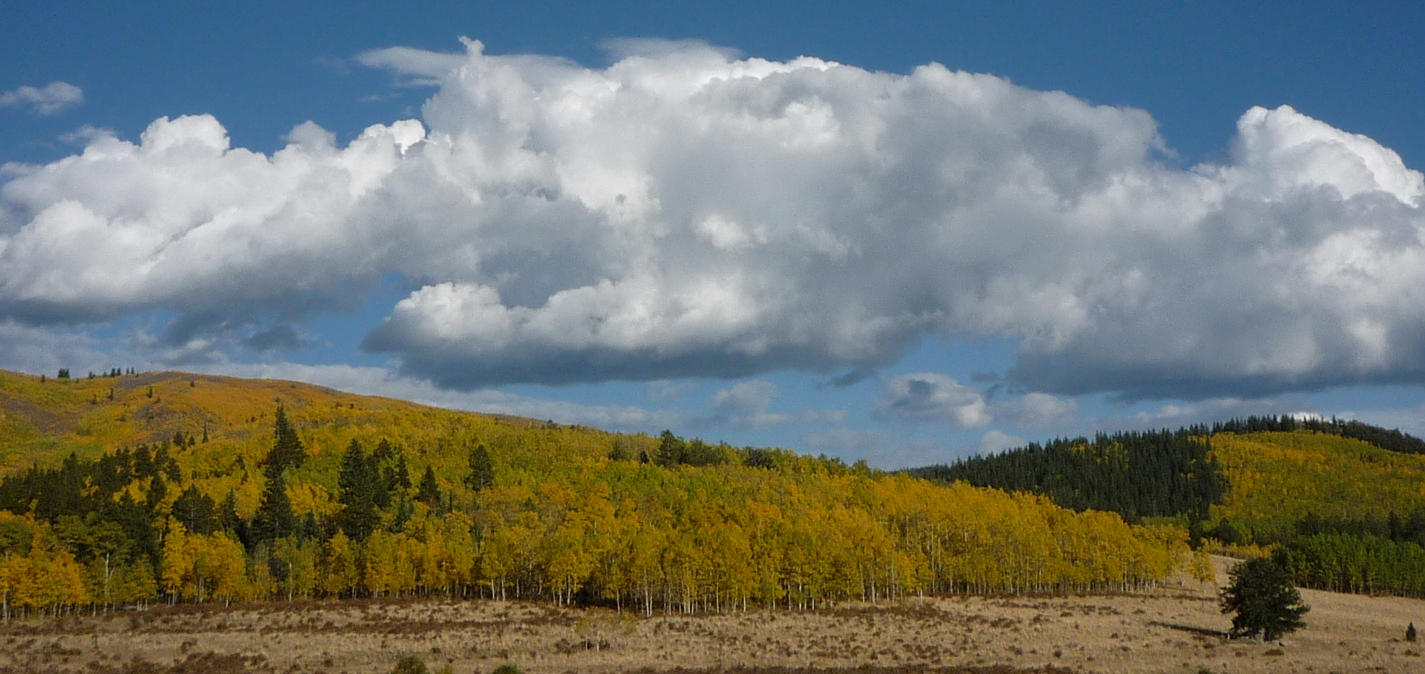 aspens color the hillside during the Colorado autumn