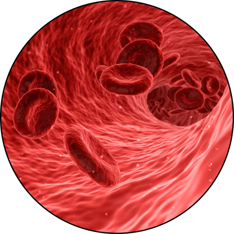 Photograph of red blood cells flowing through a vessel