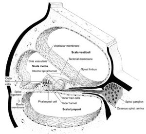 anatomy | About Science and Technology