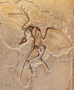 Image result for archaeopteryx