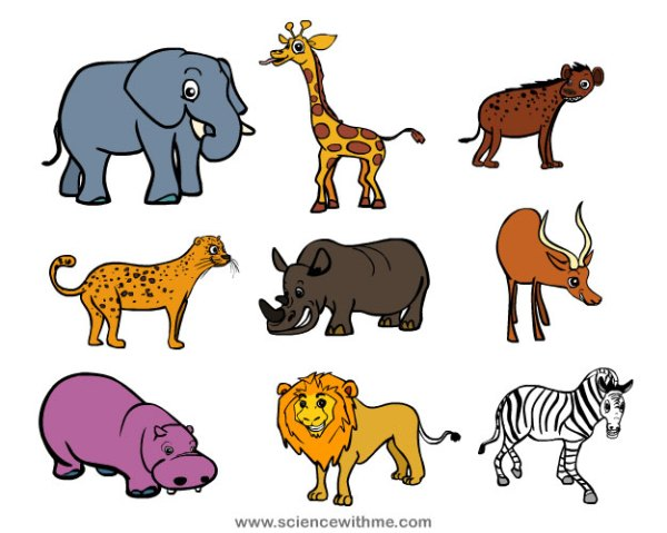 Learn about Safari Animals - Science for Kids