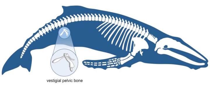 Evolution! - Ms. Jones Website