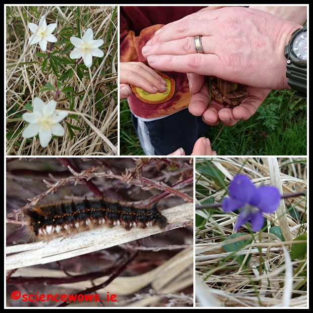 Clockwise from top left: Grass of pernassis, a frog, violet and a hairy caterpillar