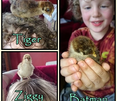 We have finally named the new chicks….