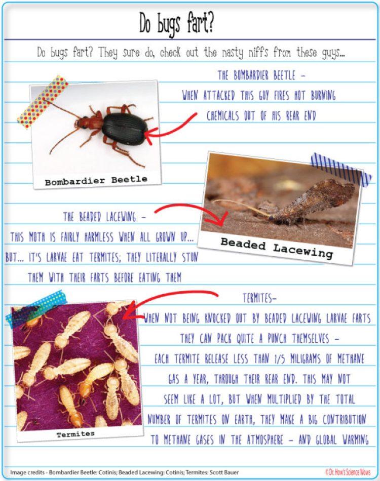 Farting-bugs