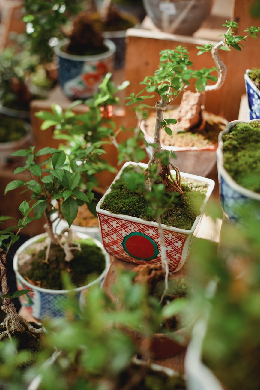 green young plants placed on table