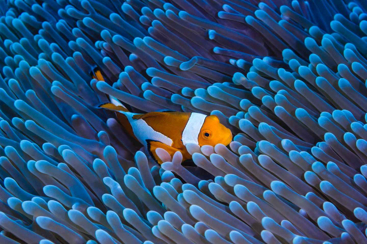 bright fish swimming among coral reefs in water