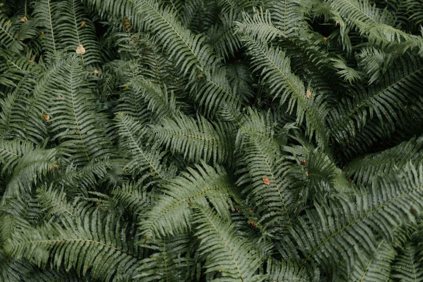 lush green fern leaves in nature