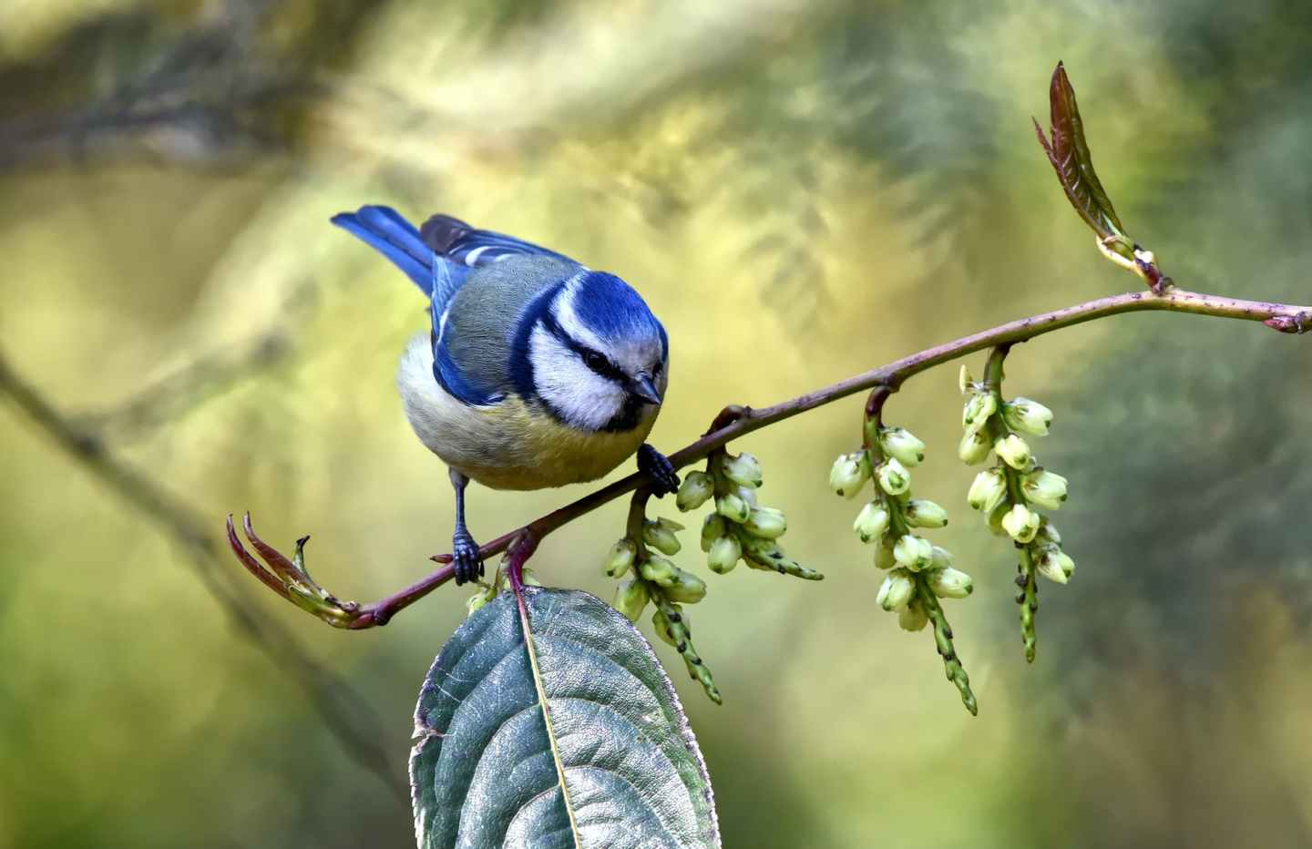 close up photo of blue bird perched on branch