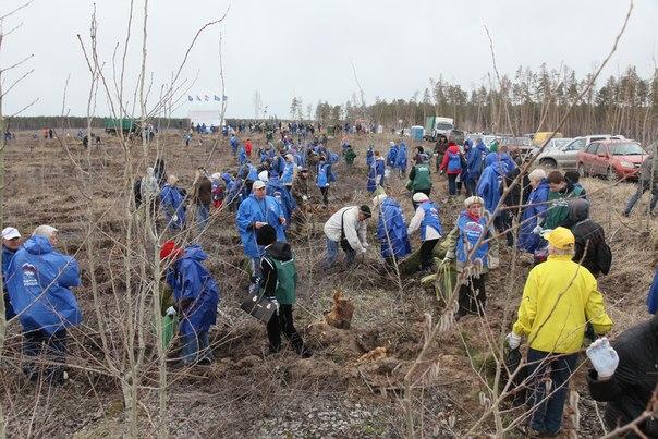 Посадка леса 25 апреля