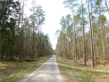 2. Jedna z leśnych dróg gruntowych, na razie nic nie zapowiada dużych wzniesień, spokojnie po woli, trochę jak w Borach Tucholskich, drzewostan również z przewagą sosny.