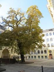 Kolejne magiczne miejsce, plac przed Synagogą Pod Białym Bocianem, pod tym drzwem przesiadują goście jednej z najsłynniejszych miejscowych knajpek, Mleczarni.