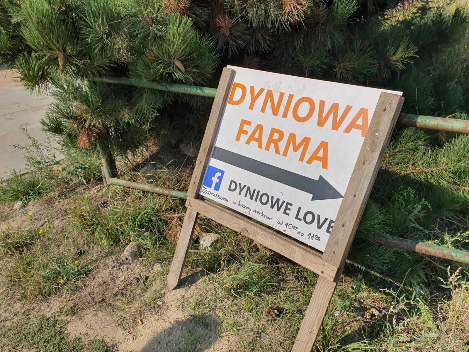 Dyniowe Love Rotmanka