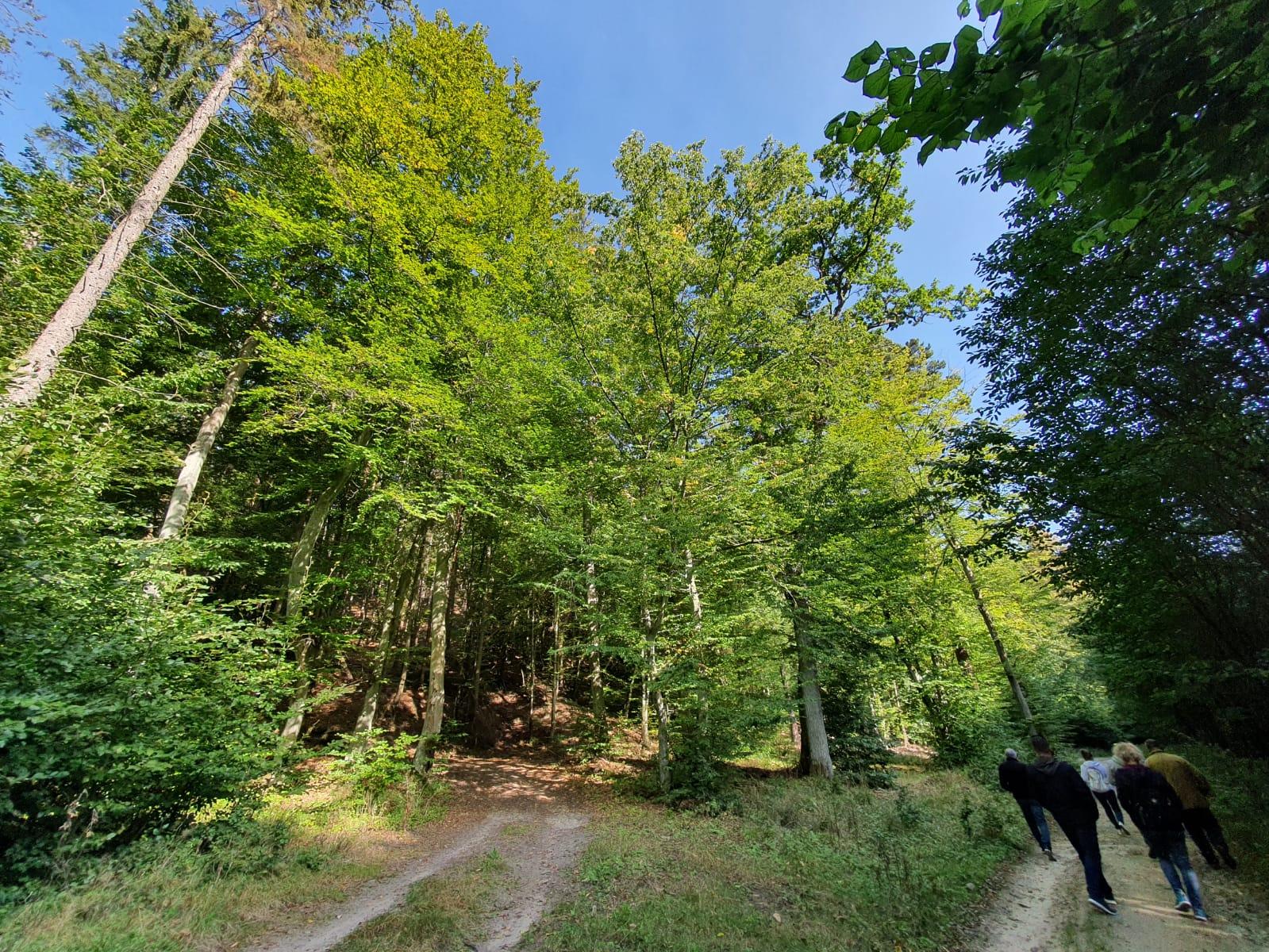 Trójmiejski Park Krajobrazowy