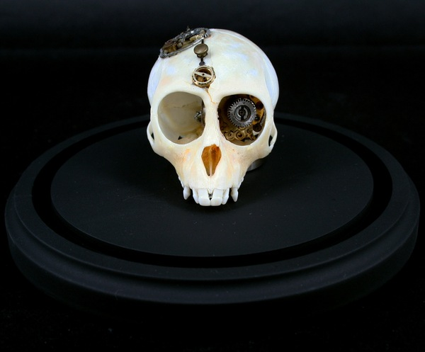 543381269294904 thumb Extreme Steampunk Beyond the Grave Terminal Techno Taxidermy