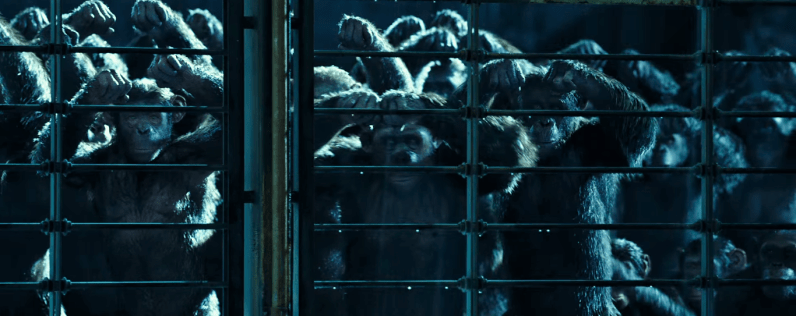War of the Planet of the Apes (496)