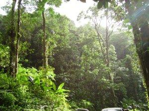 A tropical rainforest, an example of a terrestrial ecosystem (https://en.wikipedia.org/wiki/Terrestrial_ecosystem ). Photo source: https://commons.wikimedia.org/wiki/File:Tropical_forest.JPG.
