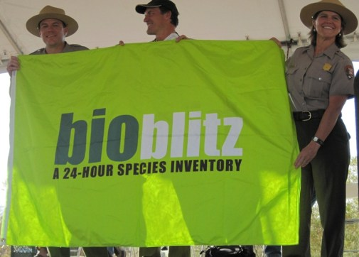 Picture from BioBlitz held in Saguaro National Park in 2011. Photo credit: https://www.nps.gov/sagu/bioblitz-2011.htm