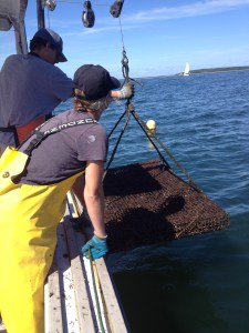 Pat and Jenny hauling up one of 100 oyster cages holding roughly 300,000 oysters!